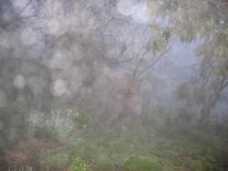 mist in garden