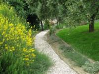 garden june 2010