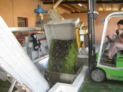 olives 2010