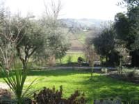 garden jan 2011