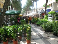 cattolica flower show