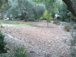 garden sept 11