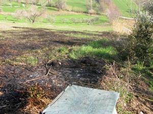 fire in the field