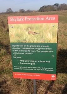 skylark notice